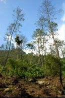 Hutan yg mulai gundul