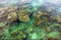 Terumbu Karang Pulau Payung
