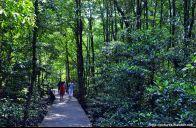 Hutan Mangrove Kota Tarakan