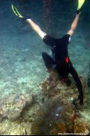 Snorkeling di dermaga Derawan Cottages