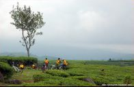 Tea Bike, Ciwalini Ciwidey