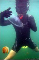 Berenang dengan Ubur-ubur Kakaban