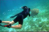 Penyu di Pulau Derawan