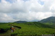 Tea Bike, Perkebunan teh Ciwalini, Ciwidey