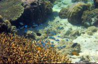 Pulau Lae-Lae & Samalona, Makassar