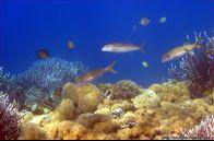 Under Water Sulamadaha