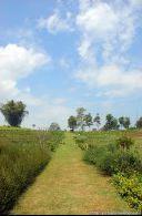 Kebun Mawar, Situhapa garut