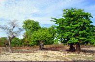 Dokumentasi perjalanan ke Nusa Tenggara Timur